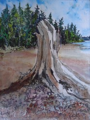 Judi Reglin - Old Stump - 8x10 Mixed Medium $40 Unframed