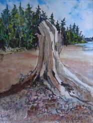 Judi Reglin - Old Stump - 8x10 Mixed Medium $40 Unframed